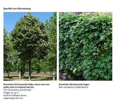 Beplanting_Straatcluster1